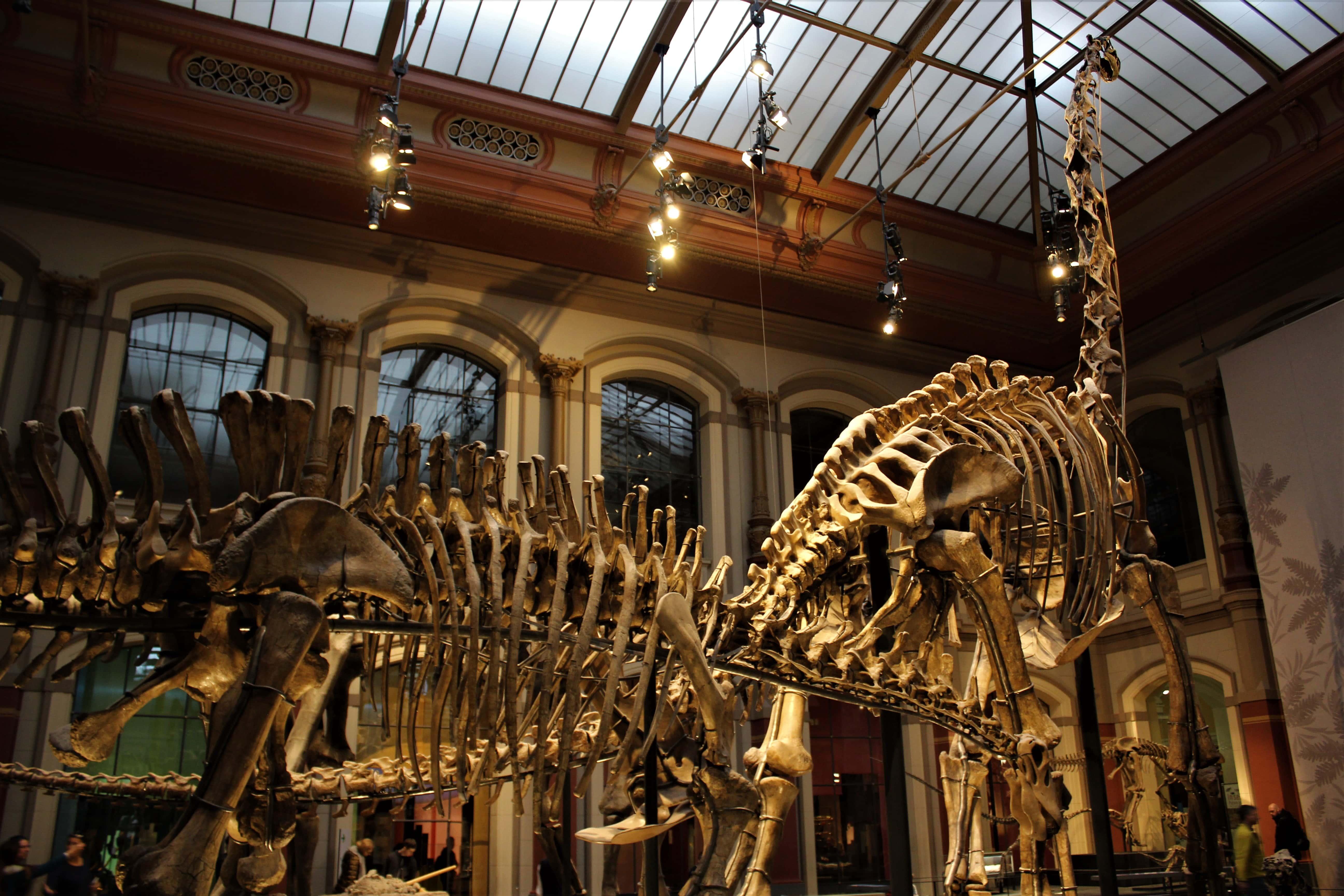 Berlin: Muzeum Historii Naturalnej, czyli jak to wszystko się zaczęło?