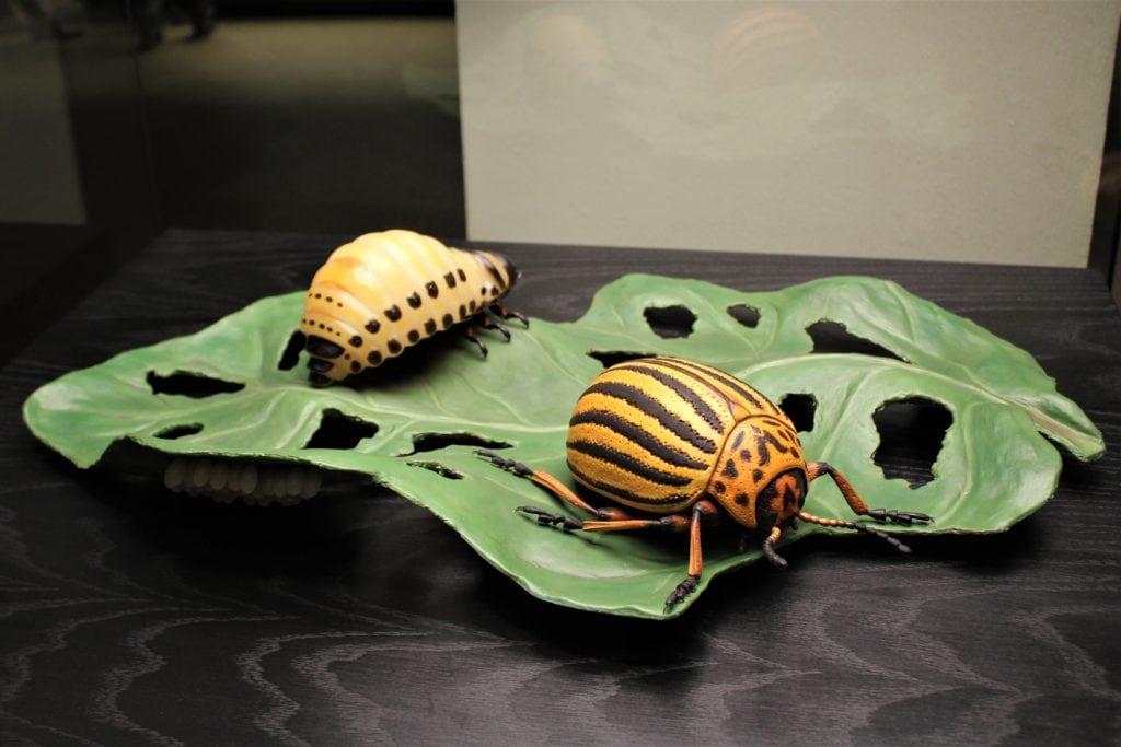 Berlin: muzeum historii naturalnej